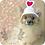 Thumbnail: Pet Valentine's Day Beanie (XS-XL)