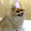 Thumbnail: Party Pet Hat ANY COLORS ONESIZE