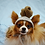 Thumbnail: ANY Sizes/Colors Pet Poop Hat Beanie (XS-XL) Poo Turd
