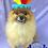 Thumbnail: Pet Indian Hat (XS-XL)