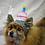 Thumbnail: Pet Birthday Cake Beanie (XS-XL) Any Colors