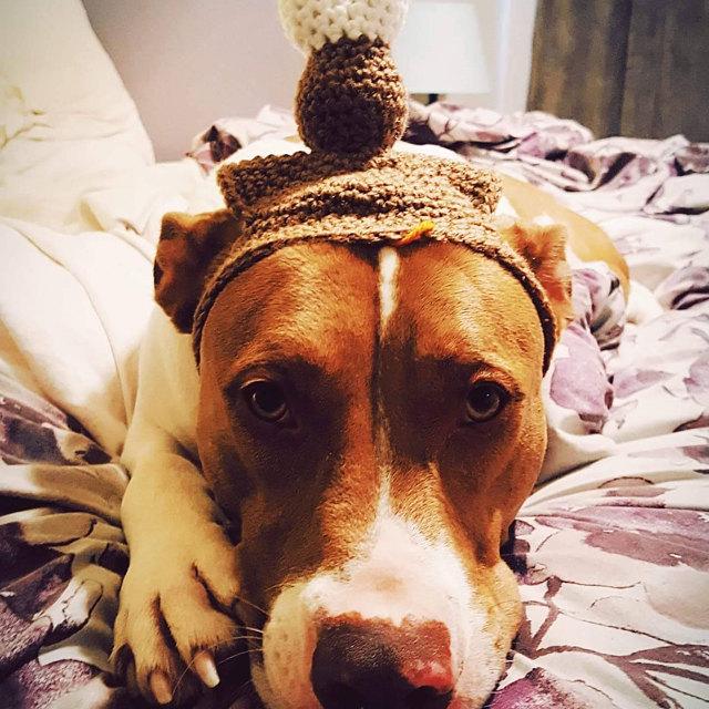 Bganz14 Super cute! And my dog, who hate