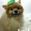 Thumbnail: Pet Dinosaur Beanie (XS-XL)