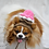 Thumbnail: ANY Sizes/Colors Pet Ice Cream Scoops Hat Beanie (XS-XL)