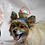 Thumbnail: Pet Easter Basket Beanie (XS-XL)