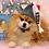Thumbnail: Customizable Pet Candy Beanie (XS-XL) Any Colors