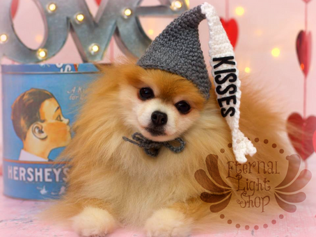 Customizable Pet Candy Hat Beanie Costume Prop (XS-XL)