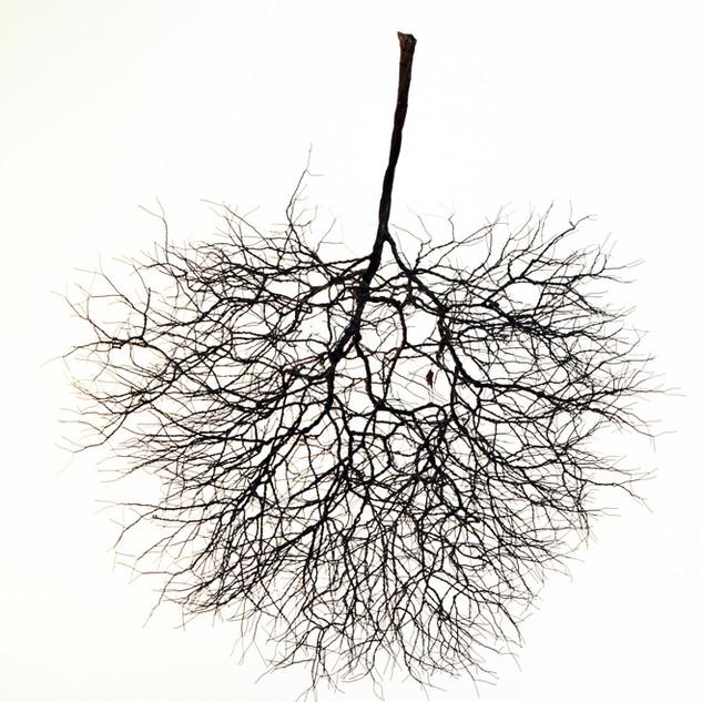 L'arbre a l'envers