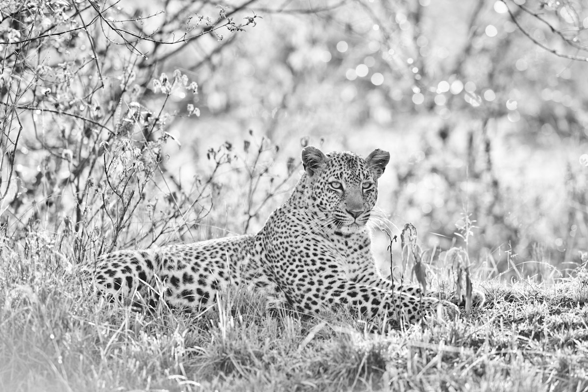 Bahati - Princess of the Mara