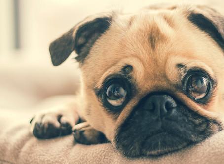 Astuces pour garder une maison propre avec un animal domestique