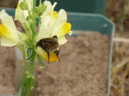 Evolutionary ecology of nectar