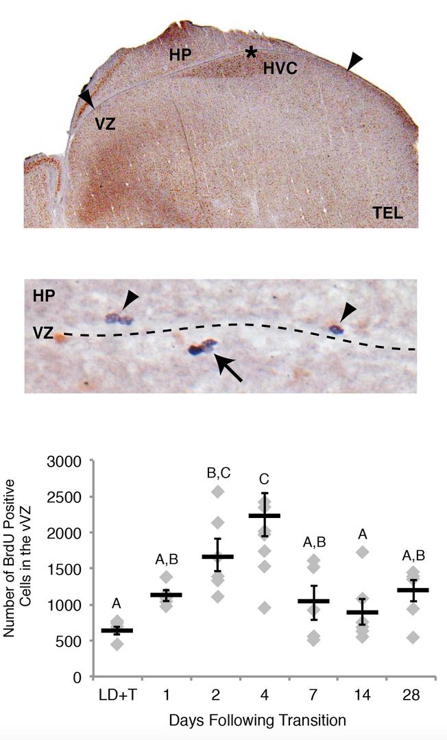 JNSCI Reactive proliferation of neural s