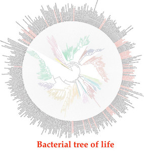A phylogeny-driven genomic encyclopaedia of Bacteria and Archaea