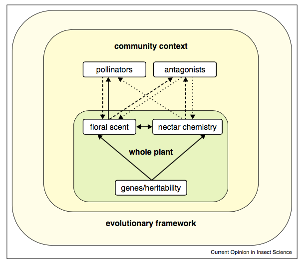 The chemical ecology of plant-pollinator interactions: recent advances and future directions