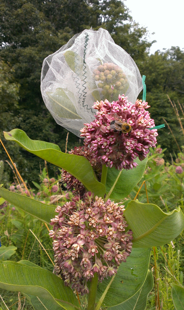 Cardenolides in nectar may be more than aconsequence of allocation to other plant parts:a phylogenetic study of Asclepias