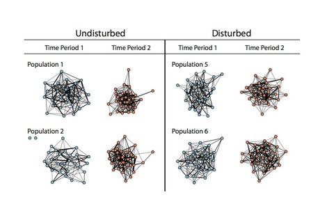 Consistency of animal social networks after disturbance