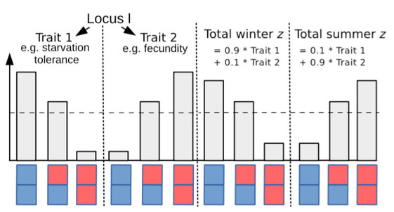 Segregation lift: A general mechanism for the maintenance of polygenic variation under seasonally fluctuating selection