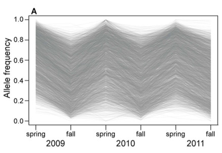 Genomic evidence of rapid and stable adaptive oscillations over seasonal time scales in Drosophila.