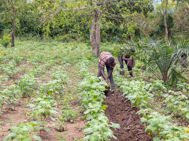 Kaduasso Kope village
