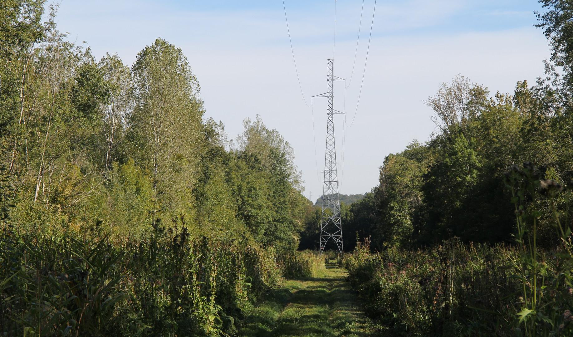 Corridor de chasse sous emprise électrique