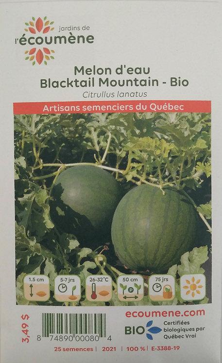 Semences Melon Écoumène