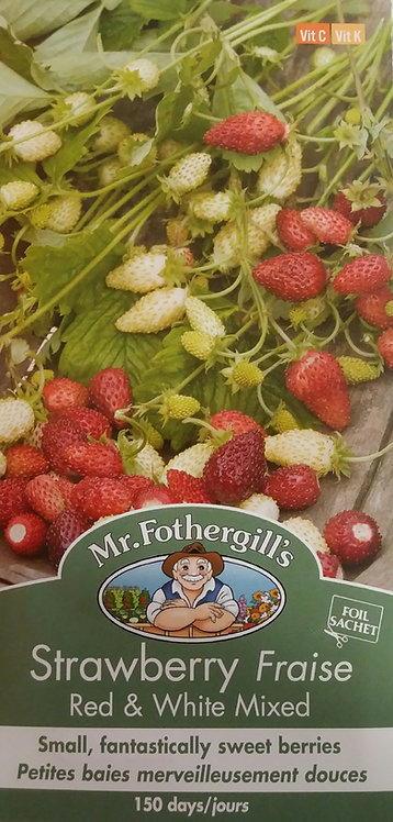 Semences Fraise Mr. Forthergill's