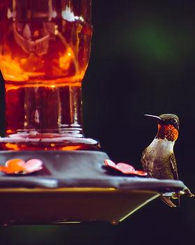 ornithologie.jpeg