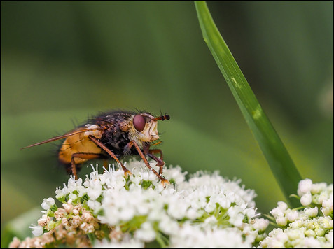 insect-AS312.jpg