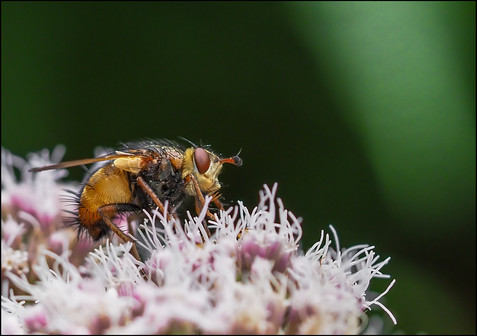 insect-AS315.jpg