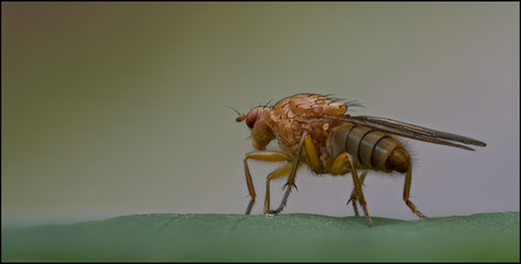insect-AS358.jpg