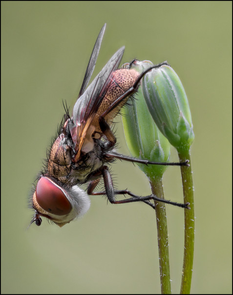 insect-AS263.jpg