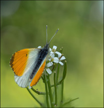 insect-AS105.jpg