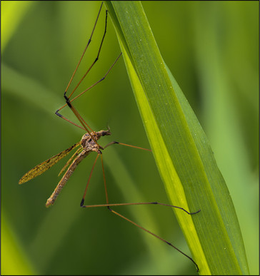 insect-AS110.jpg