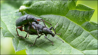 insect-AS222.jpg