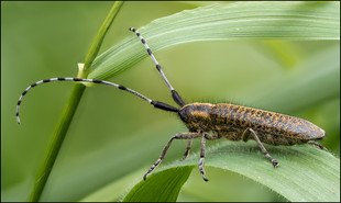 insect-AS183.jpg