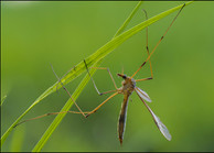 insect-AS96.jpg