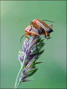 insect-AS267.jpg