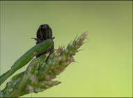 insect-AS130.jpg