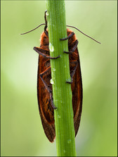 insect-AS168.jpg