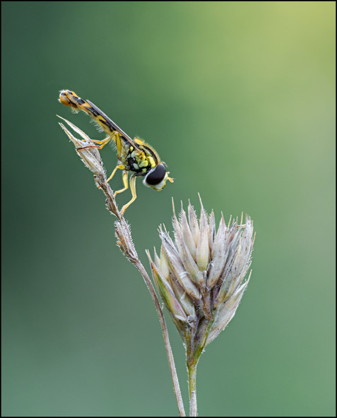 insect-AS245.jpg