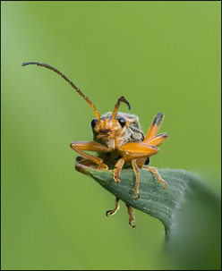 insect-AS160.jpg