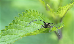insect-AS290.jpg