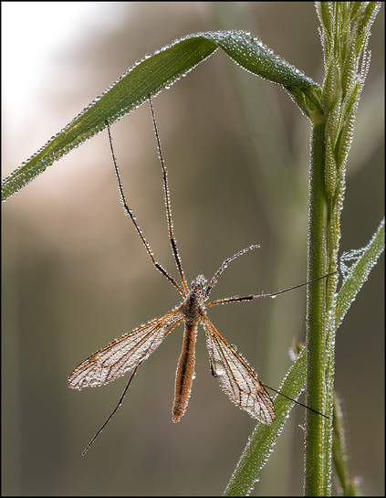 insect-AS157.jpg
