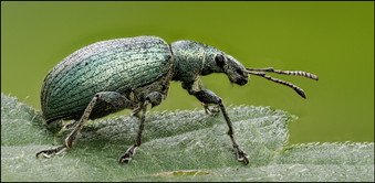 insect-AS202.jpg