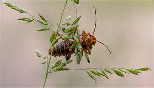 insect-AS190.jpg