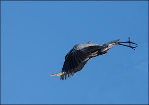 bird-AS27.jpg