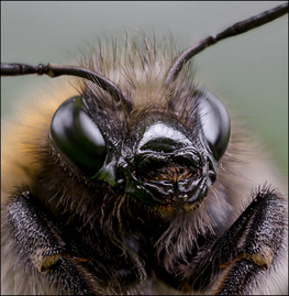 insect-AS299.jpg