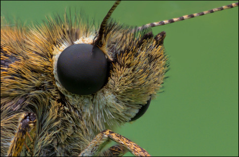 insect-AS264.jpg