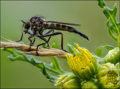 insect-AS247.jpg