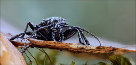 insect-as1-19.jpg